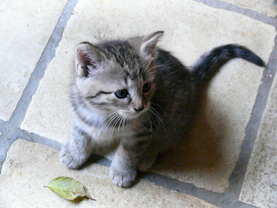 katze bringt kitten nicht ins haus was tun seite 2 katzen forum. Black Bedroom Furniture Sets. Home Design Ideas