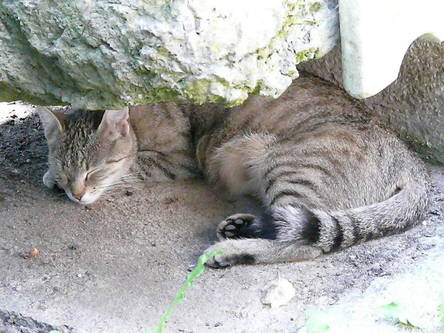 katzen forum katze bringt kitten nicht ins haus was tun. Black Bedroom Furniture Sets. Home Design Ideas